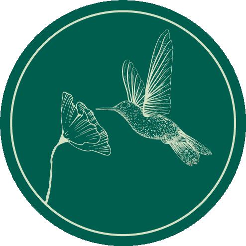 Hummingbird Social Brand and Logo 5